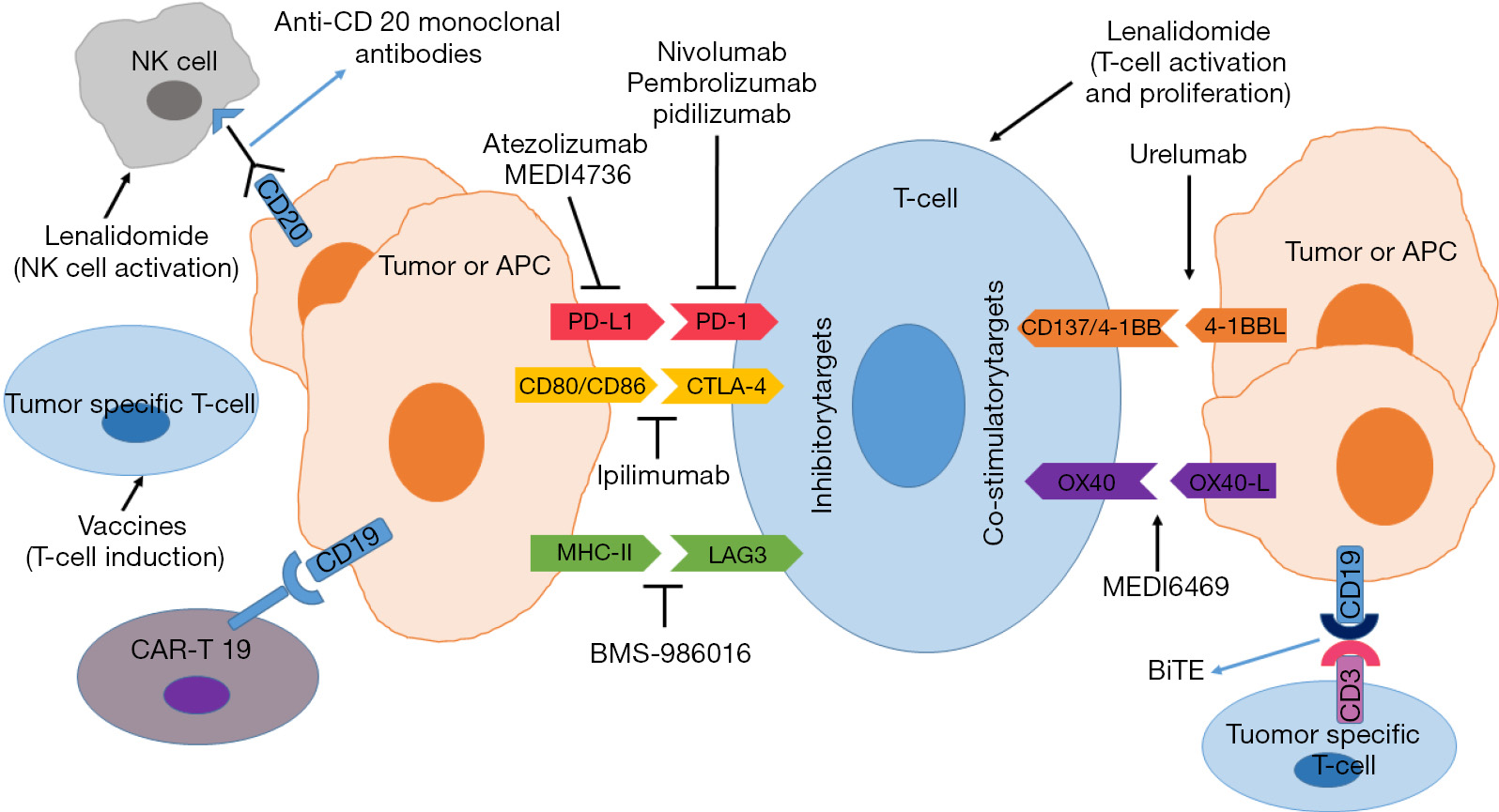 Scientific rationale for immunotherapy in lymphoma and